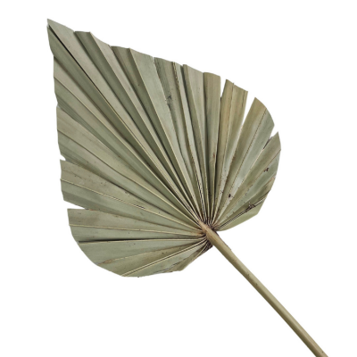 DRIED PALM SPEARS 5 PACK NATURAL
