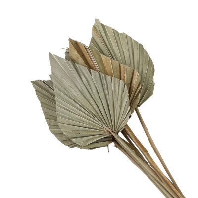 DRIED MINI PALM SPEARS 10 PACK NATURAL