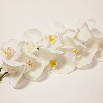 Orchid Flower - White