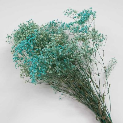 Dried Baby's Breath Teal