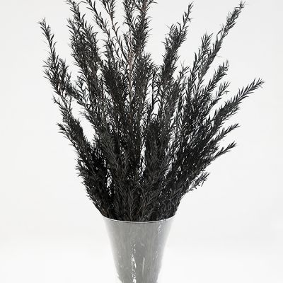 CONIFER BUNCH BLACK