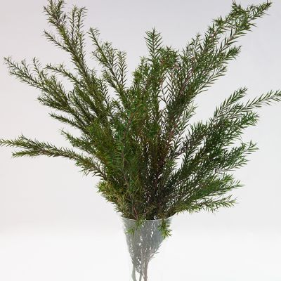 CONIFER BUNCH GREEN