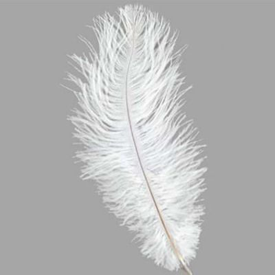OSTRICH FEATHERS - WHITE 50cm- 55cm