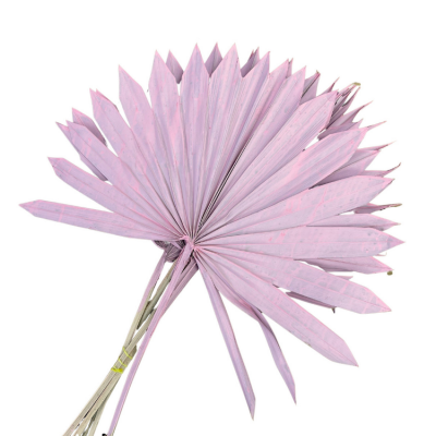DRIED PALM SUN LEAVES 6 PACK PINK