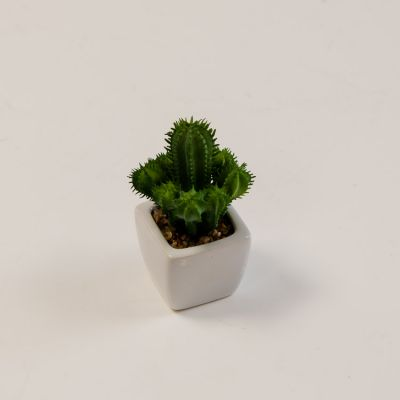 Cactus Plant With Pot - HM85905