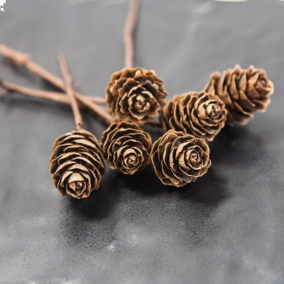 NATURAL PINE CONE STEMS