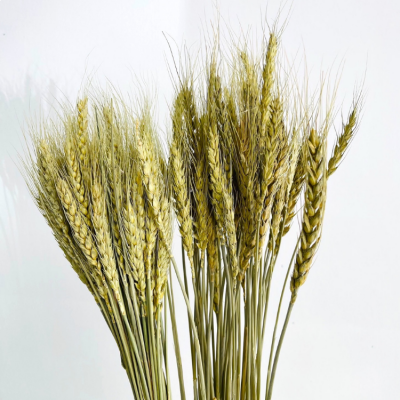 DRIED NATURAL WHEAT BUNCH