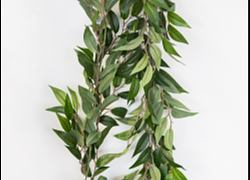 Ruscus Leaf Garland 6FT
